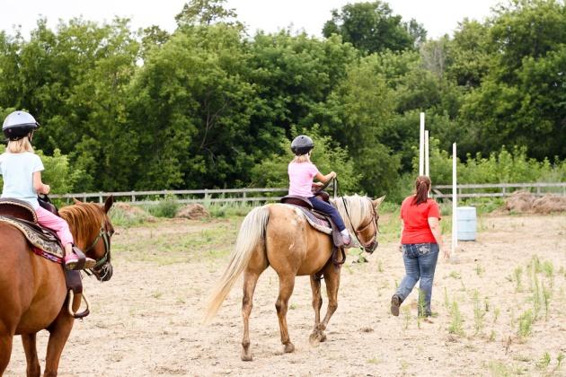 horses_-2
